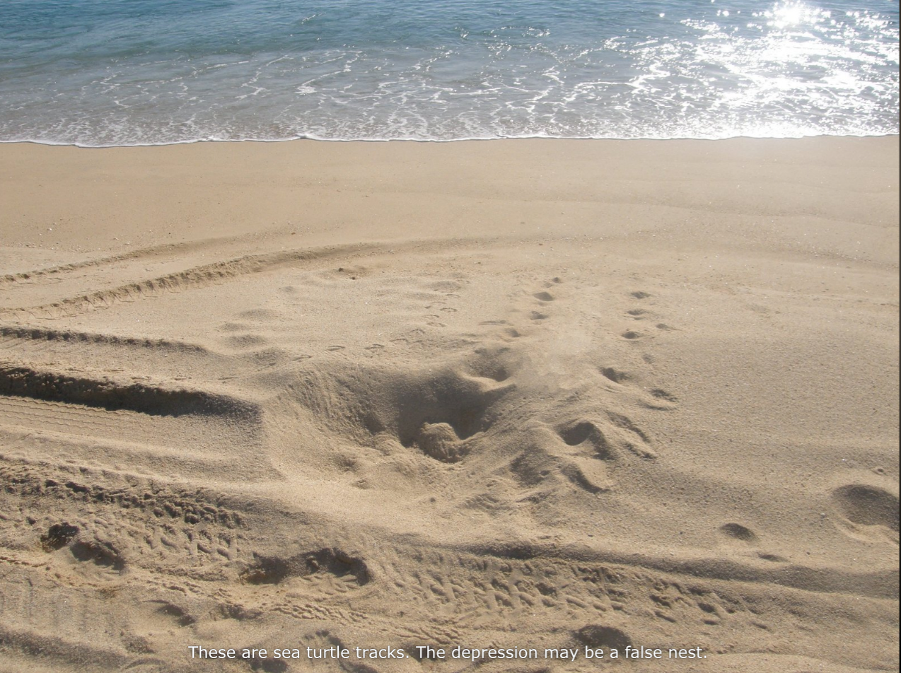 sanddunetracks_0